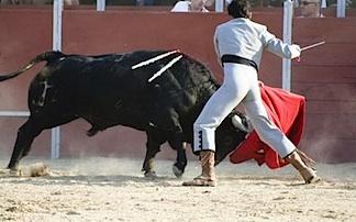bull-matador, market sentiment