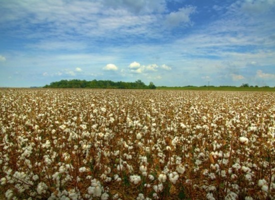 Are Cotton Prices Finding A Bottom?