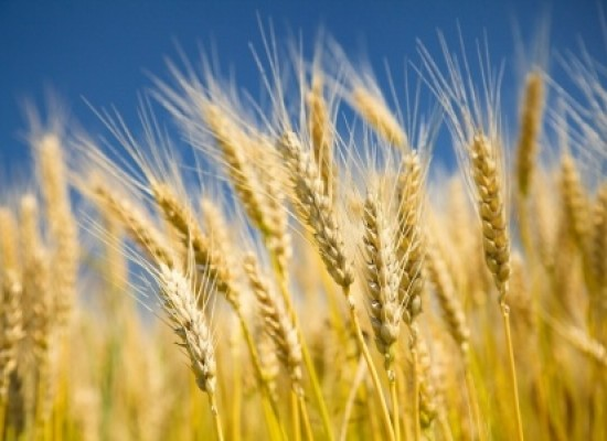 Are Wheat Futures Putting In A Bullish Reversal?