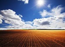 corn fields