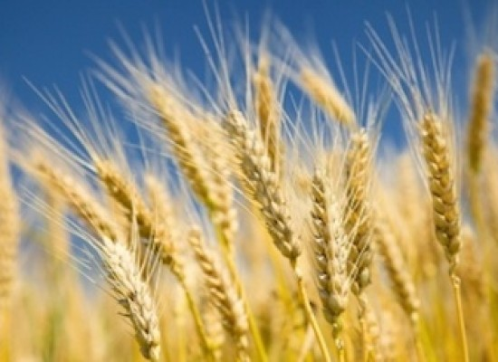 Grains Rally Into Fed: Corn Prices At Technical Resistance