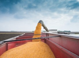 U.S. Corn Weekly Review: Are Futures Carving Out A Bottom?