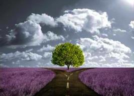 hope, dreams, future, horizon, beauty, love, friendship