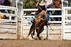 man riding bull