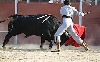 bull market reading