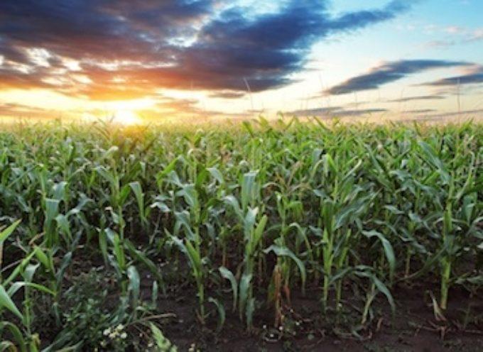 U.S. Corn Weekly Outlook: Few Surprises In October WASDE Report