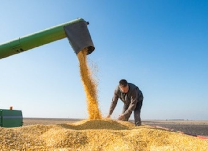 U.S. Corn Weekly Review & Futures Outlook – October 2