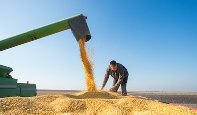 farmer during corn harvest