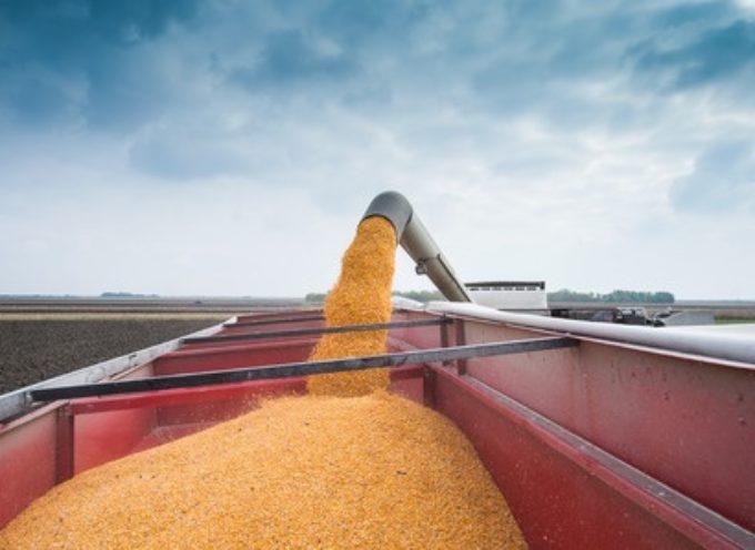 U.S. Corn Futures Weekly Price Outlook: Brazil In Focus