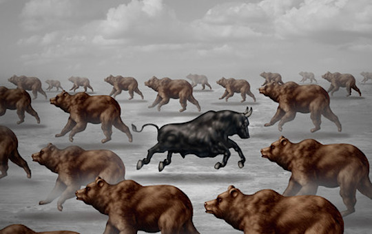 bear running against the bulls contrarian image