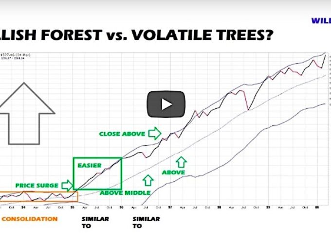 Stock Market Update: Bullish Forest or Volatile Trees?