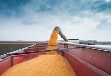 corn grain truck harvest image
