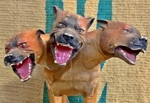 stock market trading angry dogs image