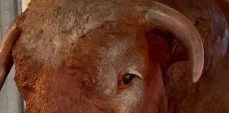 bull market horns investing image