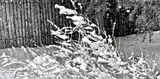 stock market winter image bearish